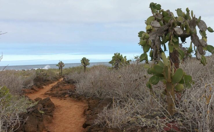through cactus forest to see giant sea turtles blue-footed birds