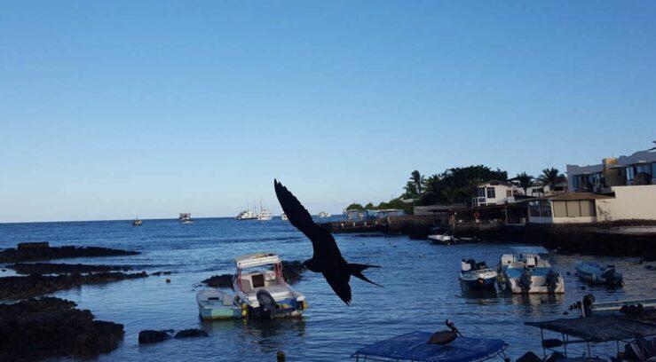 From Baltra Island to Santa Cruz flying