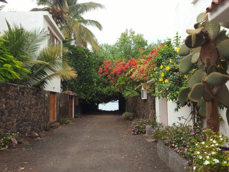 Santa Cruz street with flowers and cacti in Puerto Ayora