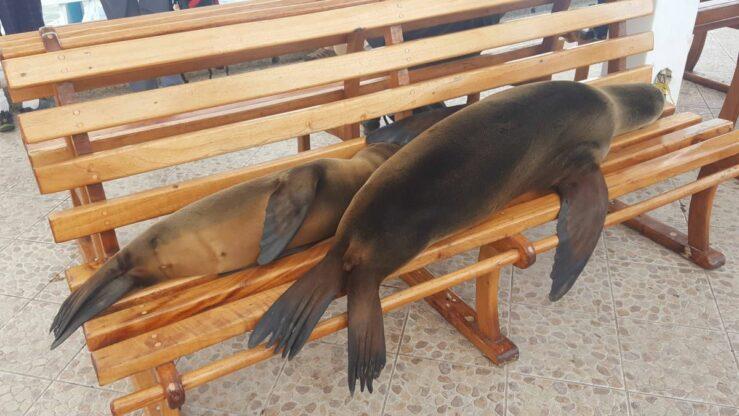 Sea lions, spotted eagle rays, Galapagos shark, lava lizards