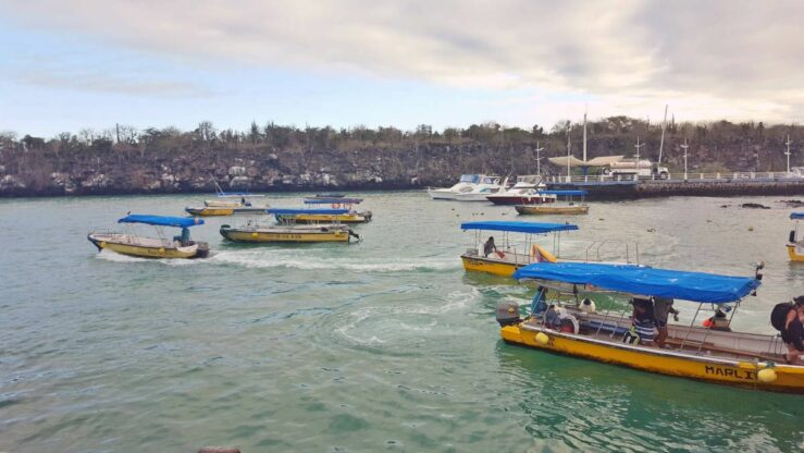 water taxis among spotted eagle rays and a Galapagos shark in the harbour of Puerto Ayora