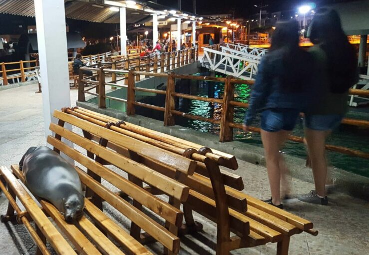 the pier in Puerto Ayora sea lions on the benches