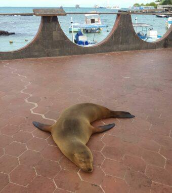 I'm bored! No fishermen, no fish, no pelicans, no iguanas, no lava lizards, no tourists around …