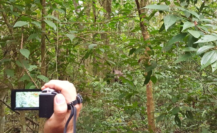 All of a sudden we spot a tapir in the jungle in Iguazú National Park.