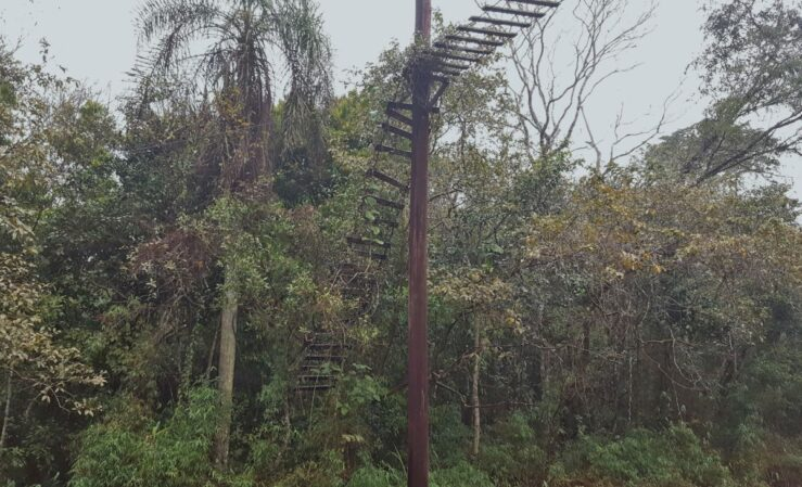 Animal ladder to cross the road at Iguazú National Park.