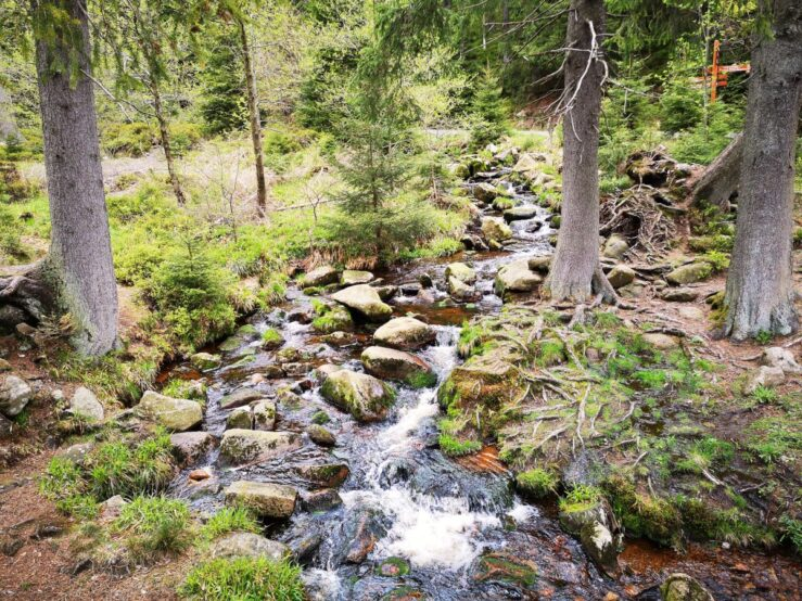 Hiking in the Harz Mountains with streams