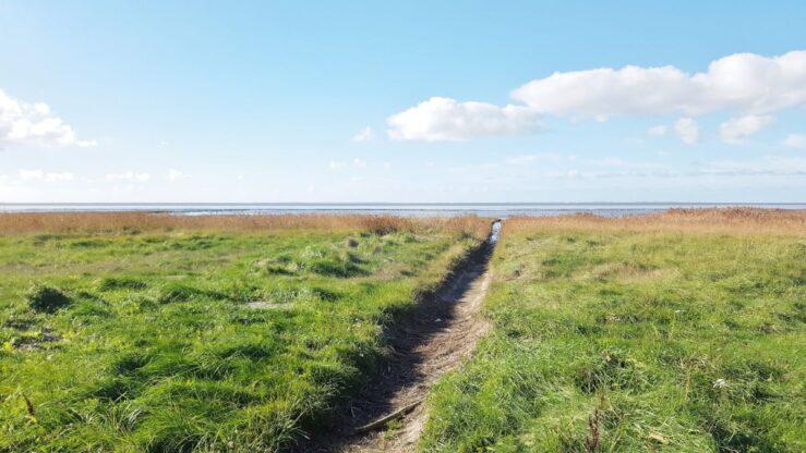 Wadden Sea grassland