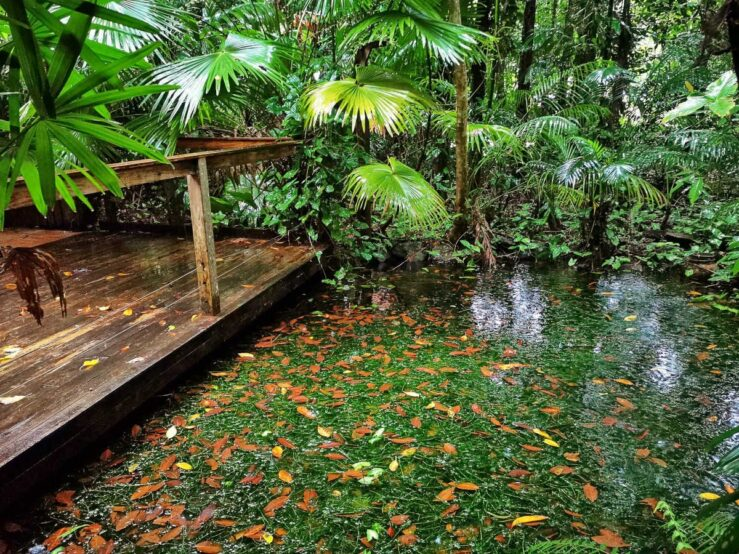 Daintree Rainforest pond