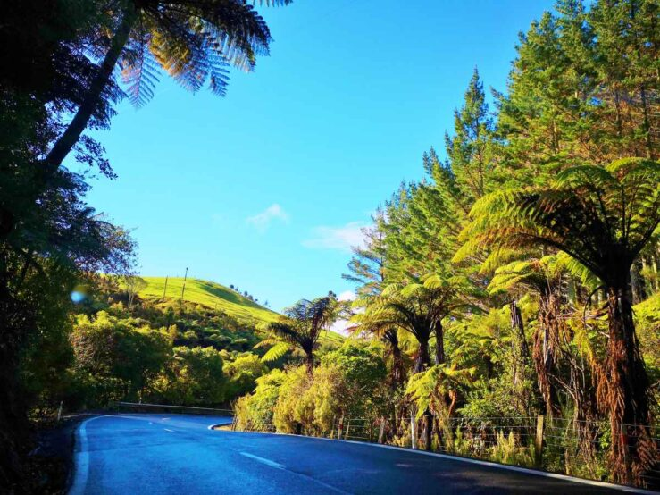 Cities Things to Do on New Zealand North Island Coromandel