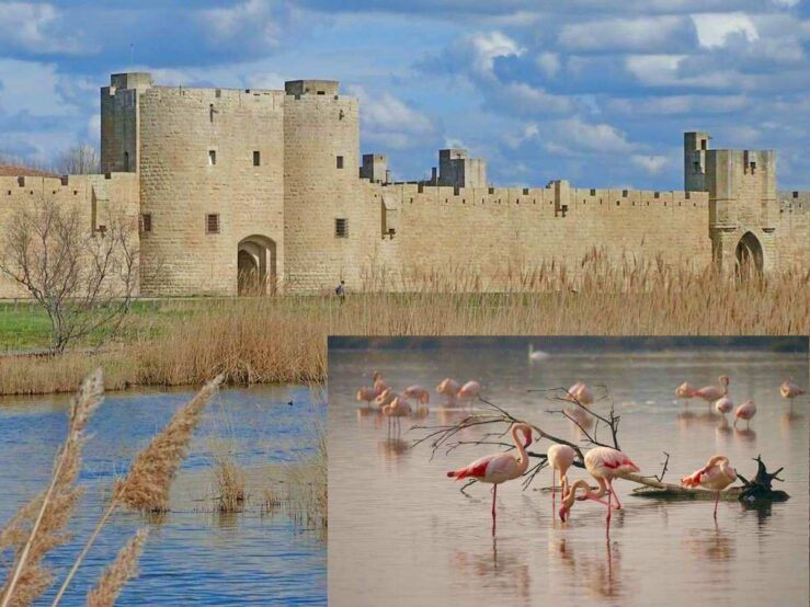 Camargue South of France Aigues-Mortes